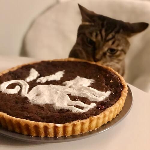 danil aksenov unsplash cat looking at a pie