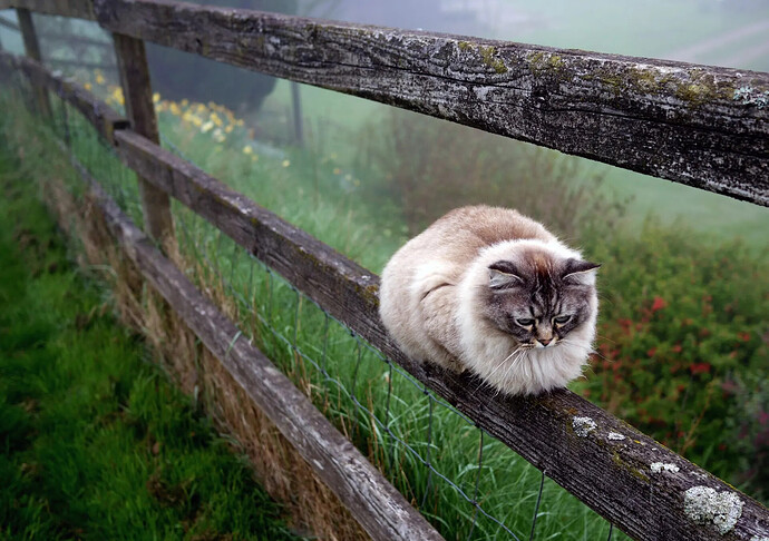 How to protect your cat outside