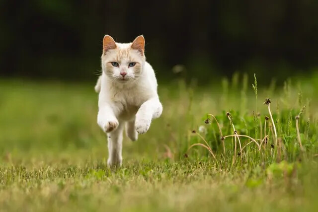 Is outdoors or indoors best for your cat